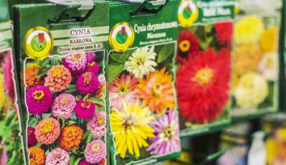 Nasiona i cebule kwiatowe