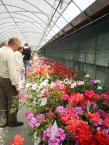 Dni Otwarte Plantpol 2011 zdjęcie 02