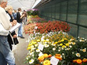 Dni Otwarte Plantpol 2011 zdjęcie 06