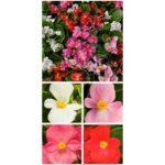 Rośliny Syngenta FloriPro Service - zdjęcie 15