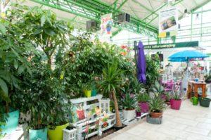 Galeria Ogrodnicza Zielone Centrum Psary - zdjęcie 2