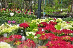 Centrum Ogrodnicze PNOS Ożarów - zdjęcie 3