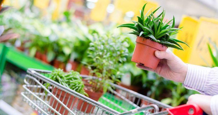 Oferta dla detalistów - ogrodnictwo - HORTICO