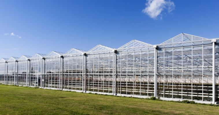 We supply professional farms