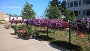 Dni Otwarte Plantpol - HORTICO - zdjęcie 08