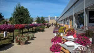 Dni Otwarte Plantpol - HORTICO - zdjęcie 23